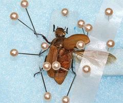 昆虫.jpg